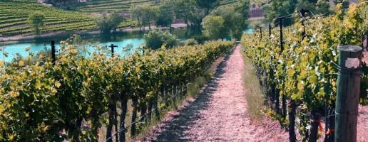 vineyards-e1449612428664