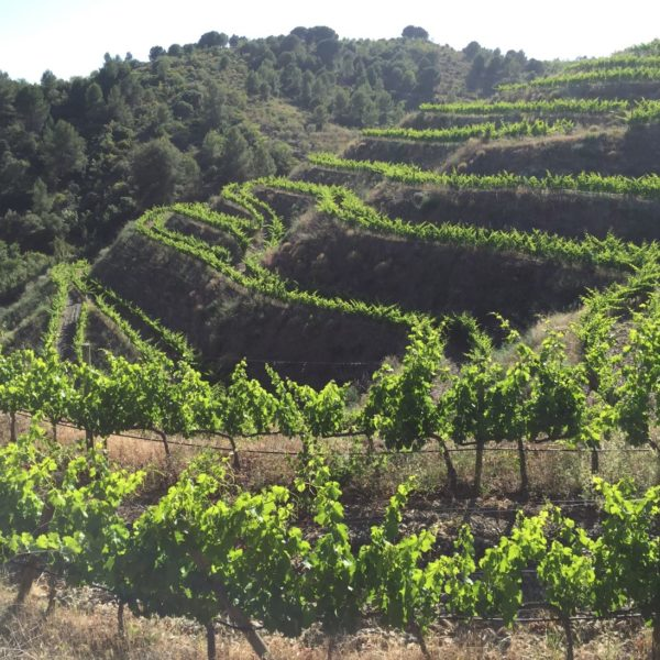 Zoning in on Priorat